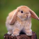Sweet-Bunny