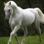 black_green_White_horse_Wallpa_2560x1440_wallpaperhi.com