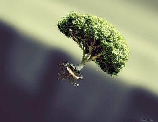 Необычное-дерево